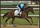 Harlan's Holiday, working at Churchill Downs on April 3.