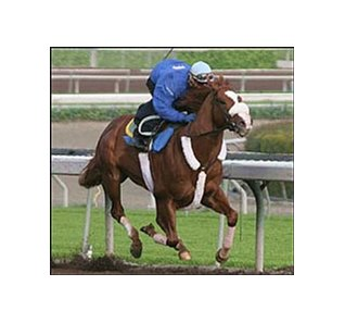 Spanish Chestnut among Santa Catalina rivals who worked Saturday.