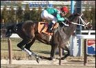 Colita, winning at Aqueduct earlier this year.