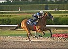 Arch Filly Breaks 10-Second Barrier In Fasig-Tipton Sale Workout