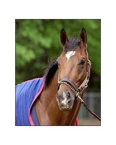 Barbaro, had bandage on left hind foot changed Tuesday.