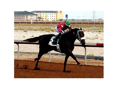Peppers Pride goes for her 18th straight win in the New Mexico Cup Fillies & Mares Championship.