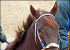 Triple Crown hopeful Smarty Jones may race next year.