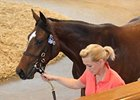 Tattersalls Book 1 Suffers Downturns