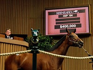 Majestic Warrior Filly Sells for $400,000