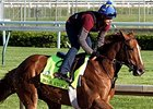 "War Story<br><a target=""blank"" href=""http://photos.bloodhorse.com/TripleCrown/2015-Triple-Crown/Kentucky-Derby-Workouts/i-rD5jBzZ"">Order This Photo</a>"