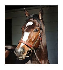 "Rachel Alexandra <br><a target=""blank"" href=""http://www.bloodhorse.com/horse-racing/photo-store?ref=http%3A%2F%2Fpictopia.com%2Fperl%2Fgal%3Fprovider_id%3D368%26ptp_photo_id%3D8831805%26ref%3Dstory"">Order This Photo</a>"