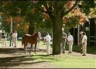 Buyers inspect horses at New York Thoroughbred Breeders' sale in Saratoga.