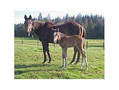 Demon Warlock's first foal, a bay filly out of the stakes-winning mare Miss Manito.
