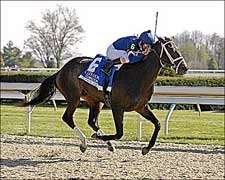 Slew's Tizzy to Skip Derby; Will Run in Preakness