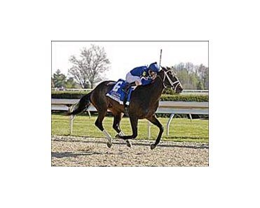 "Coolmore Lexington winner Slew's Tizzy is Preakness bound.<br><a target=""blank"" href=""http://www.bloodhorse.com/horse-racing/photo-store?ref=http%3A%2F%2Fpictopia.com%2Fperl%2Fgal%3Fprovider_id%3D368%26ptp_photo_id%3D1042455%26ref%3Dstory"">Order This Photo</a>"