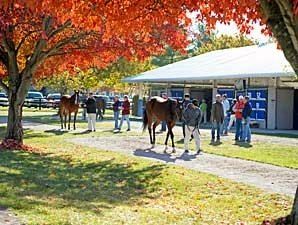 Robust Market Expected at Keeneland Nov. Sale