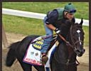 War Emblem Gets First Feel of Belmont Surface