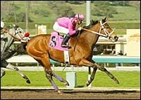 Bing Crosby Contenders Work at Del Mar