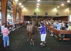 Declines Steep at OBS Fall Sale Opener