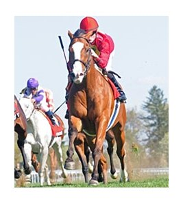 "Karelian powers home in the Maker's Mark Mile.<br><a target=""blank"" href=""http://www.bloodhorse.com/horse-racing/photo-store?ref=http%3A%2F%2Fpictopia.com%2Fperl%2Fgal%3Fprovider_id%3D368%26ptp_photo_id%3D8884619%26ref%3Dstory"">Order This Photo</a>"