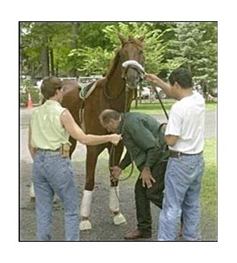 Funny Cide being tended to by assistant trainer Robin Smullins, left, trainer Barclay Tagg, and groom Santos Cardoza, right.