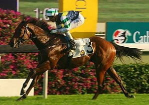 Sacred Kingdom Chases Champ Title