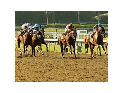 The Pro-Ride surface at Santa Anita, and the other artificial surfaces in California, will be studied by the California Horse Racing Board.