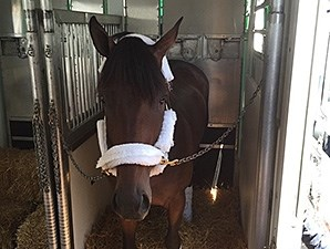 Firing Line leaves Churchill Downs for Pimlico Race Course.