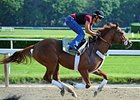 I'll Have Another jogging at Belmont 6/3/2012.