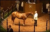 Fasig-Tipton Sale Strong to the End; Average Up 25%