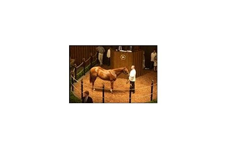 Meadowlake yearling colt, sold for $500,000 during Thursday's Fasig-Tipton Kentucky final session.