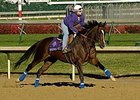Hollywood Story, seen training for the 2006 Breeders' Cup, has delivered her first foal.