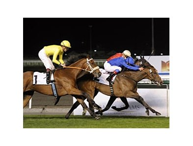 Aspectoflove outfinishes Thai Haku to win the Cape Verdi Stakes.