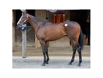 Fasig-Tipton Midlantic auction May 19 sale topper, a colt by E Dubai.