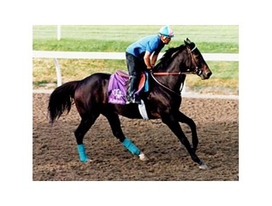 1997 Breeders' Cup Sprint winner Elmhurst