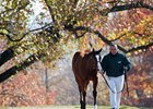 Keeneland November Sale