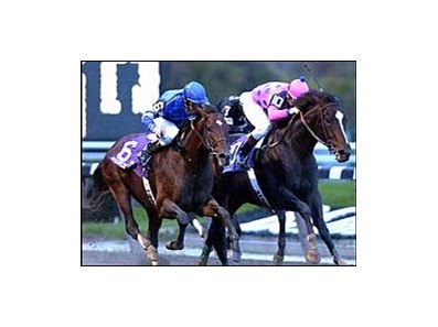 Tiznow (right) holds off Sakhee to retain his crown in the Breeders' Cup Classic.