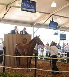 Distorted Humor Colt Brings $1.2 Million