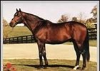 Windfields stallion Deputy Minister, who stands at Brookdale Farm.