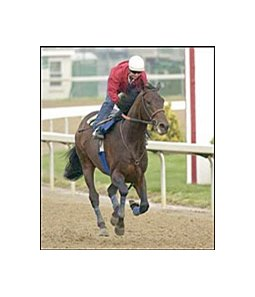Indian Express, with Dana Barnes up, after the colt's work, Friday at Churchill Downs.