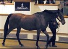 Velvet Moon brought the top price at the Newgate Stud dispersal.