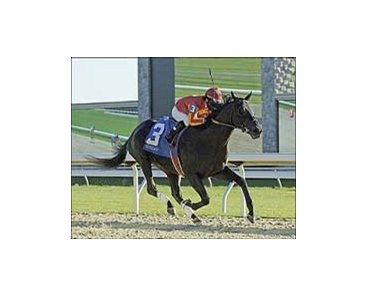"Midnight Lute plays winning tune in Keeneland's Perryville Stakes.<br><a target=""blank"" href=""http://www.bloodhorse.com/horse-racing/photo-store?ref=http%3A%2F%2Fpictopia.com%2Fperl%2Fgal%3Fgallery_id%3D6823%26process%3Dgallery%26provider_id%3D368%26ptp_photo_id%3D598255%26sequencenum%3D%26page%3D"">Order This Photo</a>"