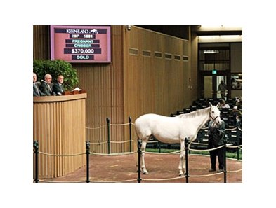 Conchita sold for $370,000 to top the Nov. 11 session of the Keeneland breeding stock sale.