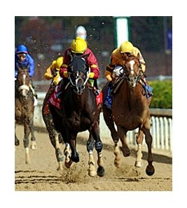 "Big Drama leads the way in the Breeders' Cup Sprint.<br><a target=""blank"" href=""http://www.bloodhorse.com/horse-racing/photo-store?ref=http%3A%2F%2Fpictopia.com%2Fperl%2Fgal%3Fprovider_id%3D368%26ptp_photo_id%3D9267384%26ref%3Dstory"">Order This Photo</a>"