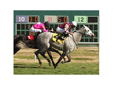 Prophesy's Nov. 23 win at Remington Park gave trainer Steve Asmussen a single season record 556th win.