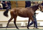 Sadler's Wells filly sold for record price at Houghton sale.