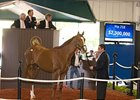 Colt; Distorted Humor - Tomisue's Delight by A. P. Indy was the $2.3-million sale-topper.
