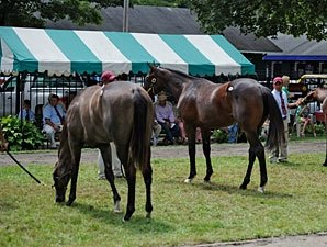 Saratoga Sale Memories: Most Are Good
