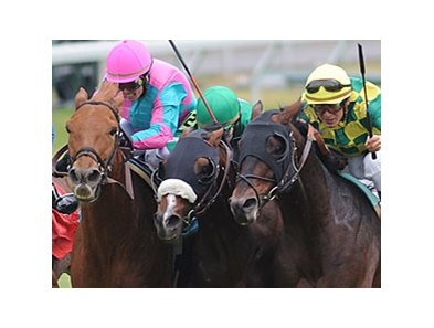 "Cloudy's Knight (left) outfights Winchester (middle) and Yate's Black Cat to win the Sycamore at Keeneland.<br><a target=""blank"" href=""http://www.bloodhorse.com/horse-racing/photo-store?ref=http%3A%2F%2Fpictopia.com%2Fperl%2Fgal%3Fprovider_id%3D368%26ptp_photo_id%3D8571266%26ref%3Dstory"">Order This Photo</a>"
