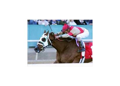 "Time's Mistress races to a 4 3/4-length victory in the Honeybee Stakes  Friday afternoon at Oaklawn Park.<br><a target=""blank"" href=""http://www.bloodhorse.com/horse-racing/photo-store?ref=http%3A%2F%2Fpictopia.com%2Fperl%2Fgal%3Fprovider_id%3D368%26ptp_photo_id%3D892170%26ref%3Dstory"">Order This Photo</a>"