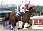 "The speedy Hard Spun will break from post 8 in the Breeders' Cup Classic (gr. 1).<br><a target=""blank"" href=""http://www.bloodhorse.com/horse-racing/photo-store?ref=http%3A%2F%2Fpictopia.com%2Fperl%2Fgal%3Fprovider_id%3D368%26ptp_photo_id%3D923452%26ref%3Dstory"">Order This Photo</a>"