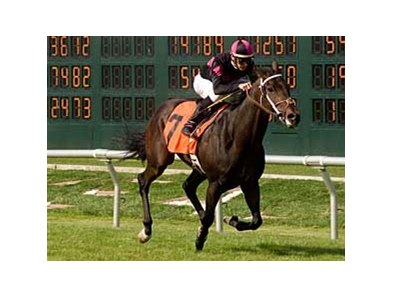 Surf Town won the final race on closing day of the 2008 Bay Meadows meet.