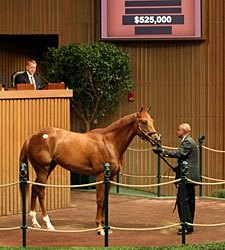 Maria's Mon Colt Brings $525,000 at Keeneland