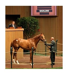 Hip No. 43, a Maria's Mon colt who brought $525,000 at the Keeneland sale of 2-year-olds in training.